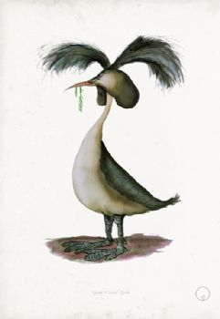 Great Crested Grebe - artist signed print